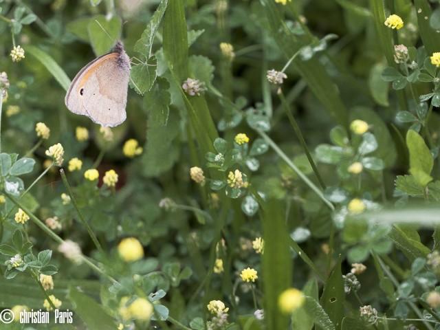 2016-07-03_sortie papillons GV anime par romain © Christian Paris (1)