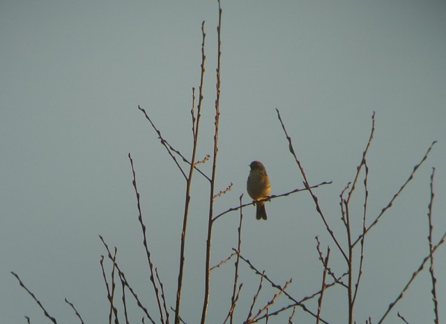 Oiseau mystere 1