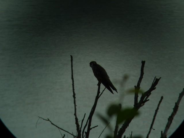 Oiseau mystere 3