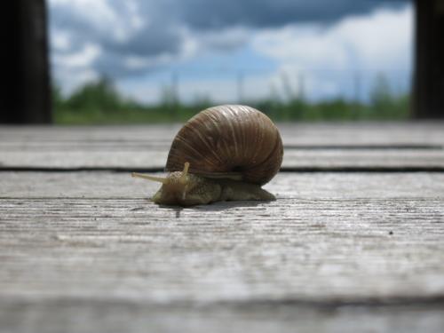 Escargot à la maison du Grand-Voyeux