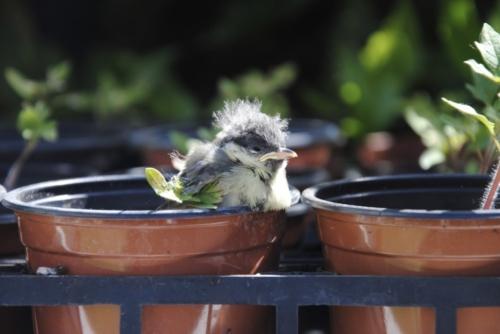Atterrissage au milieu des plantes