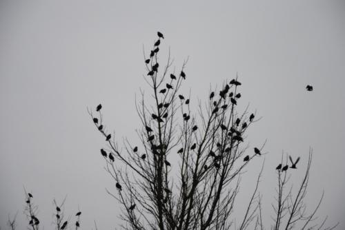 Feuillage d'oiseaux