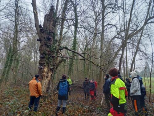Discussions autour de la préservation  du bois mort